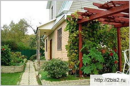 Вертикальное озеленение на даче в фото-2