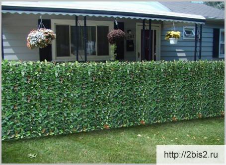 Вертикальное озеленение на даче в фото-6