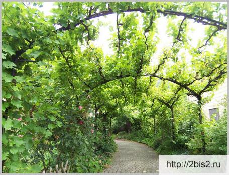 Вертикальное озеленение на даче в фото