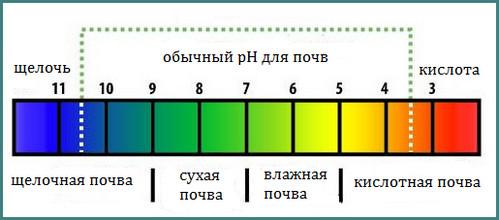 Как определить кислотность почвы в домашних условиях, советы, анализ