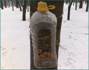 Кормушка для птиц своими руками из пластиковой бутылки, фото-3